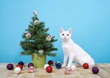 Arbre de Noël miniature avec les jouets de chat et le chat tombé d'ornements se reposant à côté de lui Image stock