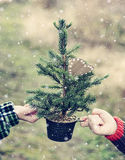 Arbre de Noël nu Image libre de droits