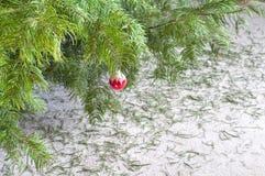 Arbre de Noël sec après saison des vacances avec  images libres de droits