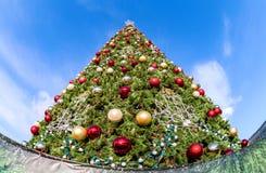 Arbre de Noël sur le fond de ciel bleu Photos libres de droits