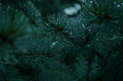 Arbre de Noël vert Photographie stock libre de droits