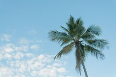 Arbre de noix de coco avec le ciel bleu Photos stock