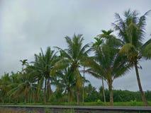 Arbre de noix de coco en Thaïlande photographie stock libre de droits