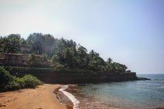 Arbre de noix de coco de mer de Goa Photos libres de droits