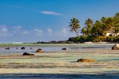 Arbre de noix de coco sur la lagune merveilleuse de plage de Polynésie Photo stock
