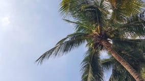 Arbre de noix de coco sur le fond de ciel photo stock
