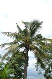 Arbre de noix de coco sur le fond de ciel Images stock