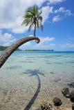 Arbre de noix de coco au-dessus de Polynésie française d'eau peu profonde Images libres de droits