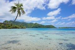 Arbre de noix de coco au-dessus de Polynésie française de Huahine de lagune Photographie stock