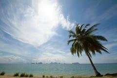 Arbre de noix de coco avec le beau ciel nuageux bleu Images libres de droits