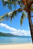Arbre de noix de coco avec le bel océan bleu Image stock