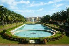 Arbre de noix de coco dans le jardin photos libres de droits