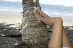 Arbre de noix de coco de repos de patte de femme, Costa Rica Images libres de droits