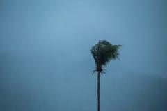 Arbre de noix de coco de tempête Image libre de droits