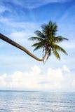 Arbre de noix de coco en mer en Thaïlande Photos stock