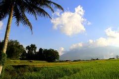 Arbre de noix de coco et rizière Image libre de droits
