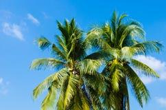 Arbre de noix de coco jumel Photographie stock libre de droits