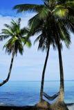 Arbre de noix de coco sous le ciel bleu Photographie stock libre de droits