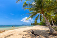 Arbre de noix de coco sur la mer Phu Quoc, Vietnam Photo libre de droits