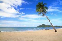 Arbre de noix de coco sur un sable blanc Image libre de droits
