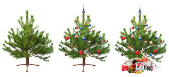 Arbre de Noël pour l'animation ultérieure Photographie stock libre de droits