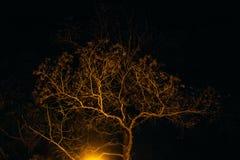 Arbre de nuit à la lumière de lampe photo stock