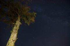 Arbre de nuit Photographie stock libre de droits