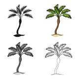 Arbre de Palm Beach Le repos d'été choisissent l'icône dans l'illustration d'actions de symbole de vecteur de style de bande dess Images libres de droits