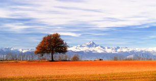 arbre de panorama Photographie stock libre de droits