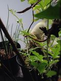 Arbre de pastèque Photographie stock libre de droits