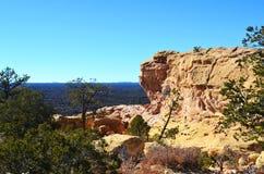 Arbre de pignon élevant l'outcropping proche de roche Photo stock