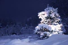 Arbre de pin de l'hiver Photographie stock libre de droits