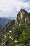 Arbre de pin en montagnes Images libres de droits