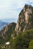 Arbre de pin en montagnes Photos libres de droits