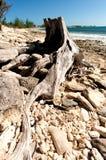 Arbre de plage Photos libres de droits