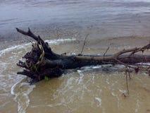 Arbre de plage Photographie stock libre de droits