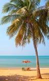 arbre de plage Images stock