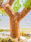 Arbre de plage de l'amour Images stock