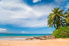arbre de plam d'Hawaï de plage Photographie stock