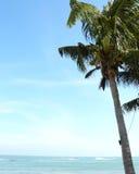 Arbre de plam de noix de coco à la plage photo libre de droits