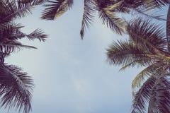 Arbre de plam de noix de coco avec l'espace de copie sur le ciel Images libres de droits