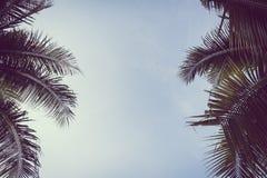 Arbre de plam de noix de coco avec l'espace de copie sur le ciel Photo libre de droits