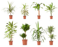 Arbre de plante en pot photo stock