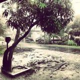 Arbre de pluie Photographie stock