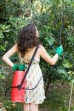 Arbre de pulvérisation de femme dans le verger Image stock