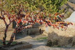 Arbre de rite de mariage dans Sudak, Crimée Images stock