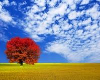 Arbre de rouge d'automne photo stock