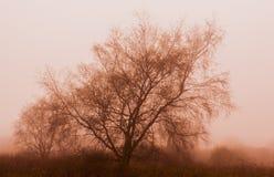Arbre de sépia en brouillard Image libre de droits