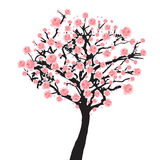 Arbre de Sakura de pleine floraison Photo libre de droits