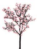 Arbre de Sakura de pleine floraison Photographie stock libre de droits